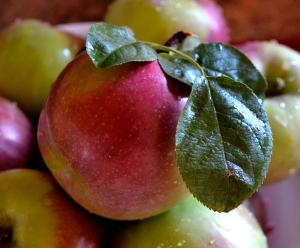 apple1-lw-100115